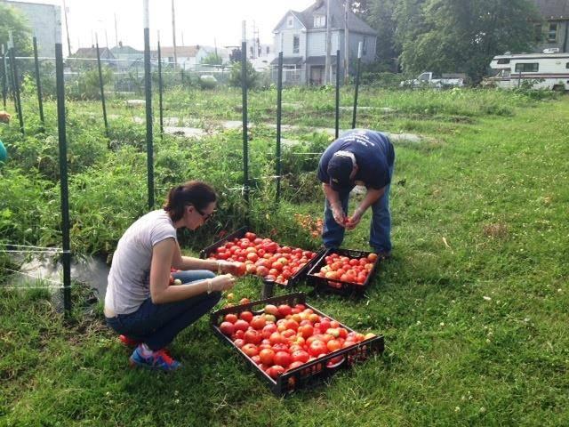 photo of volunteer vegetable gardening